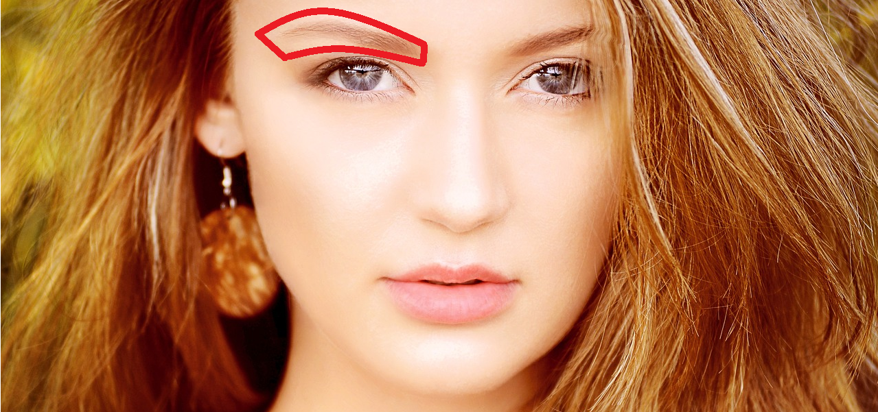眉毛の骨格を示した画像