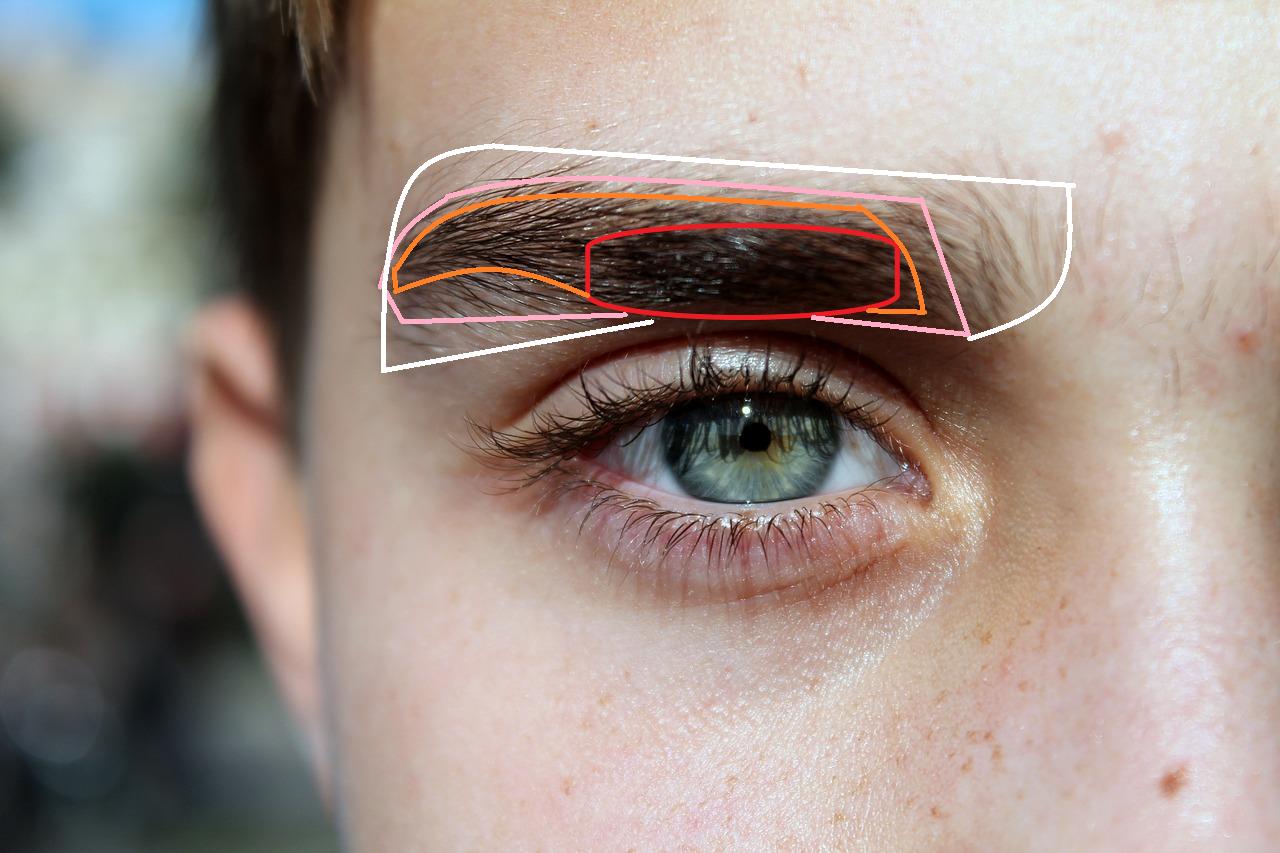 眉毛の濃さを4段階で示した画像